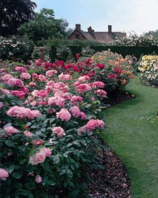 Growing Roses. Formal Garden DesignRose ...