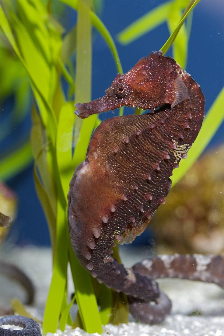 24 best Animals at Georgia Aquarium images on Pinterest ...