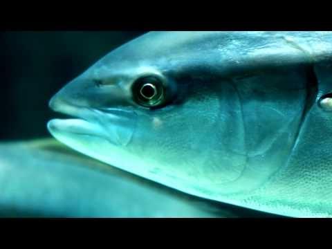 Dive into the excitement of exploring Two Oceans Aquarium...  @funholidays #dive #travel #explore