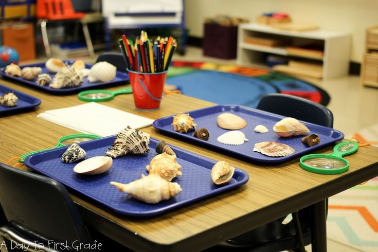 A Day In First Grade-Kindergarten set up for a seashell / ocean provocation.