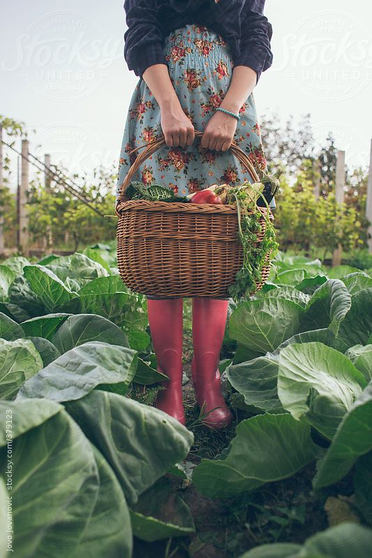 Gardening time - woman holding basket full of fresh vegetables  by JovoJVNVC | Stocksy United