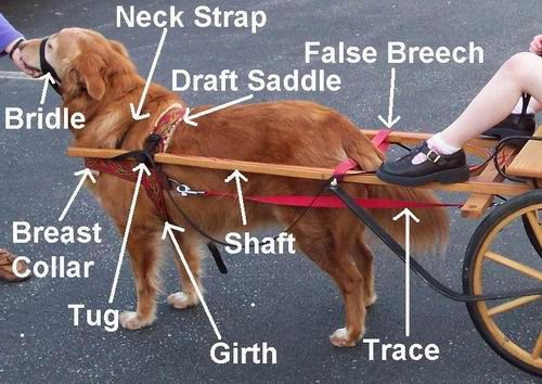Pin By Marie Rothwell On Everything Dog Pinterest Dogs Pets And. Pin By Marie Rothwell On Everything Dog Pinterest Dogs Pets And Puppies. Wiring. Homemade Dog Pulling Harness At Scoala.co