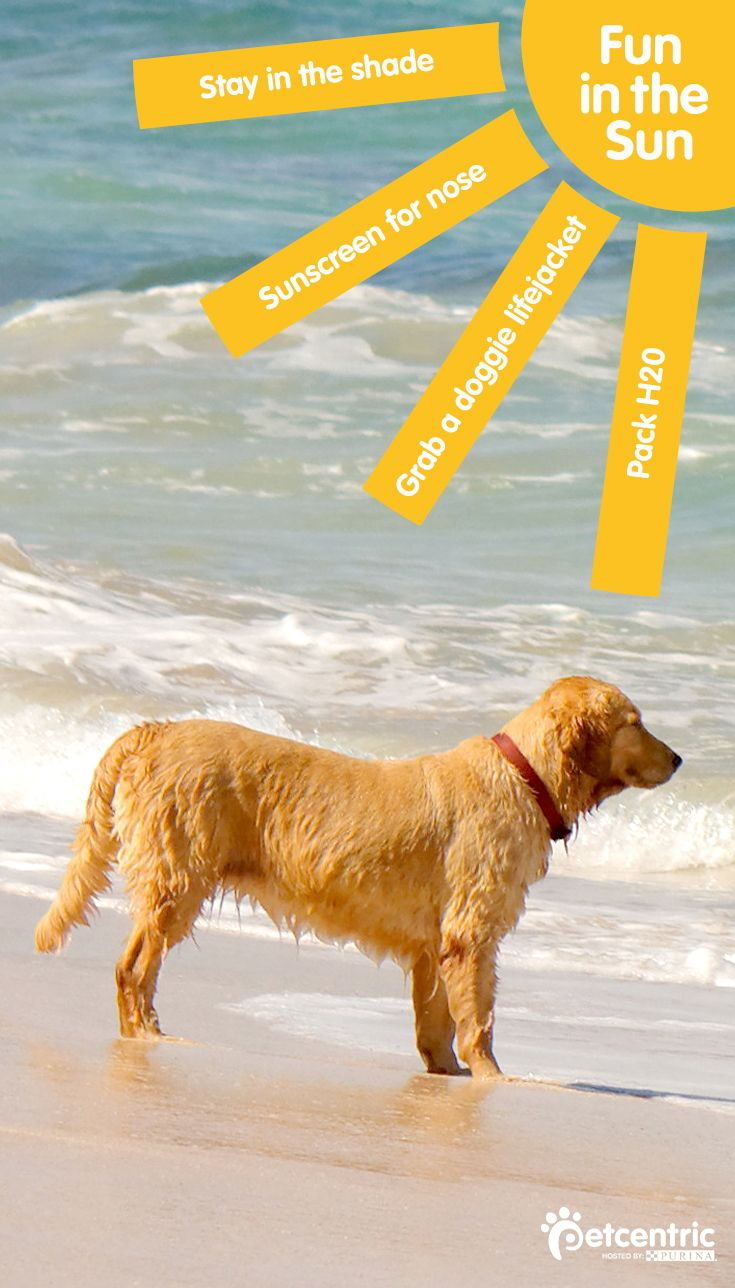 Are you prepared for hitting the beach with your dog or cat this summer? Follow this how to guide for fun trips on the coast.