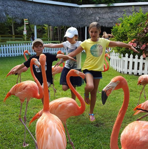 Friday is for flamingos! Hang out with your friends @ArdastraZoo. #Nassau Photo: scooba540 http://bit.ly/1QTlG