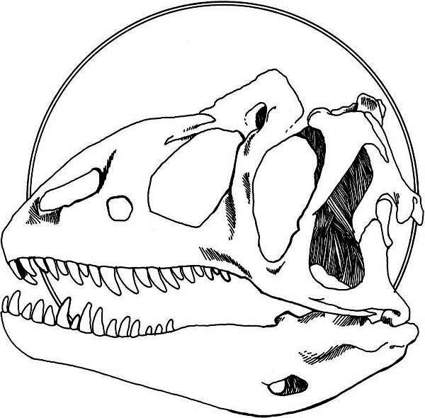 Allosaurus Allosaurus Head Fossil Coloring Page Coloring