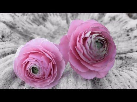 Tutorial ranúnculos azúcar, modelado en pasta de goma( pasta para flores) sin…