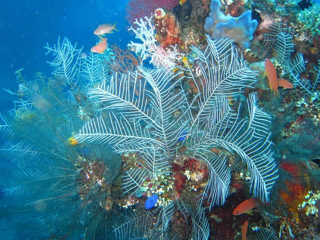 Underwater Coral Tulamben Liberty Wreck Bali Indonesia