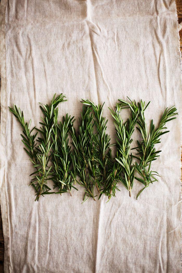 Rosemary / Golubka