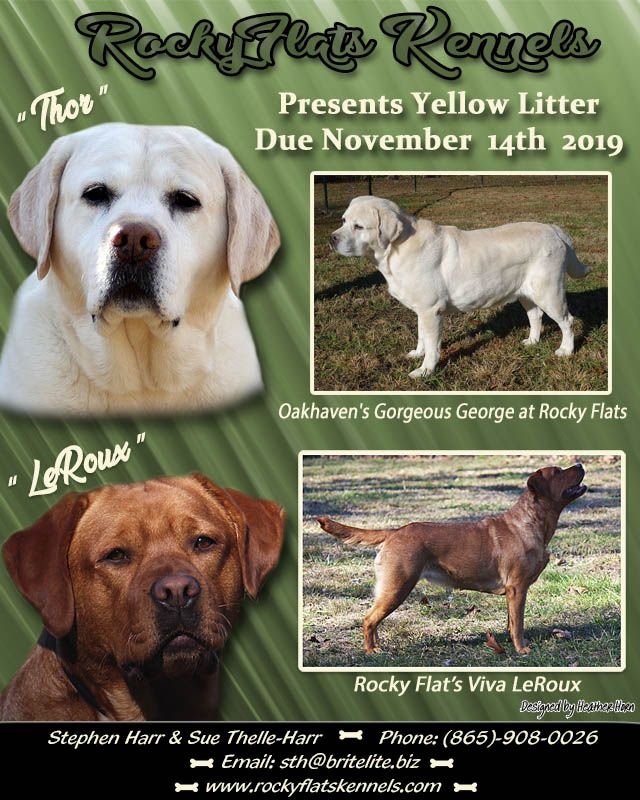 We Take Pride In Providing Quality Champion Pedigreed Akc English Labrador Retrievers Puppies We In 2020 Labrador Retriever Puppies Retriever Puppy Labrador Retriever