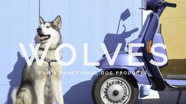 Fun + Functional Dog Products! Leads, collars and harnesses to improve everyday adventures.