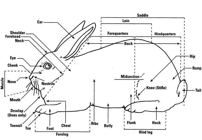 rabbit information worksheets | Image Copyright , Ohio State University Extension. Used with ...