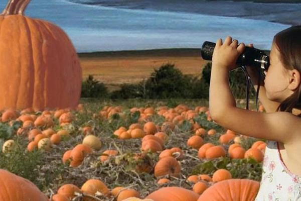 Valley Pumpkin Festival | Wolfville, Nova Scotia | Set your sights on finding a giant pumpkin!