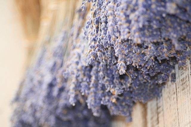 Faire sécher et conserver la lavande