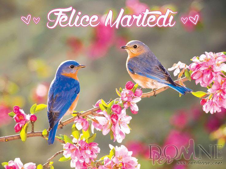 2 buon martedì immagine con frase aforismo uccellini alberi in fiore felice martedì