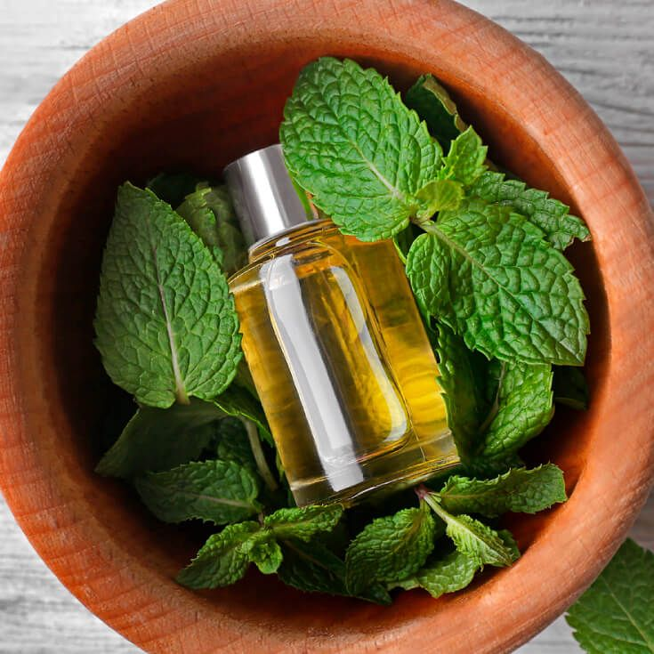 11 Benefits of Melissa Essential Oil Lemon Balm | anti-inflammatory, Alzheimer's, cold sores, infections, blood sugars diabetes, skin health, anti-tumor agent, boosts mood, fights depression, blood pressure, cholesterol, pms and menstrual symptoms,