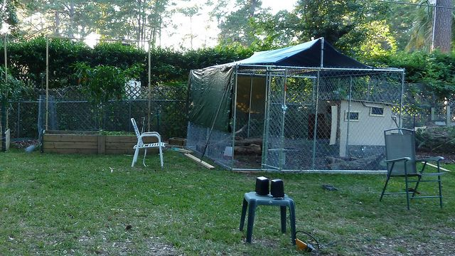 Large Dog Kennels Costco : Ideas about chain link dog kennel on pinterest