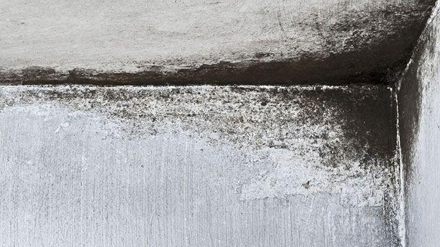 Muffa sui muri: rimedi naturali