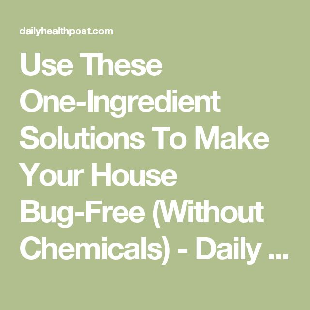 Use These One-Ingredient Solutions To Make Your House Bug-Free (Without Chemicals) - Daily Health Post