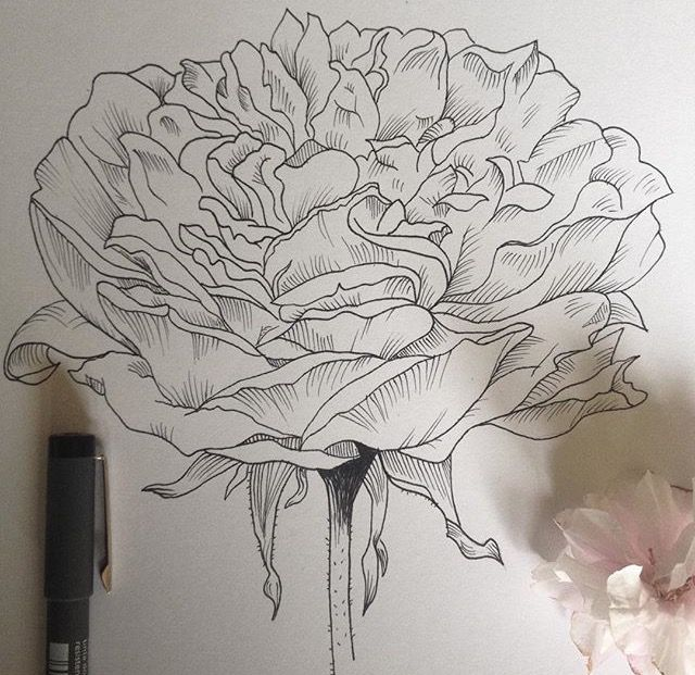 Line work done with waterproof fineliners #flower #drawing #blossom #sketch #tattoo #art #nature