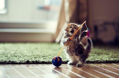 """I got it, I got it, I won!!! Hooray me!"""