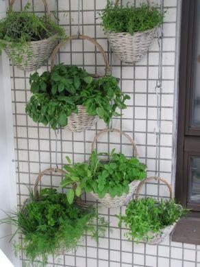 Fotografie článku: Příprava čerstvých bylinek - krájení, tlučení i zmrazování