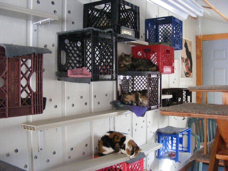 Dog and Cat Rescue use: Milk crates (Feline Rescue)