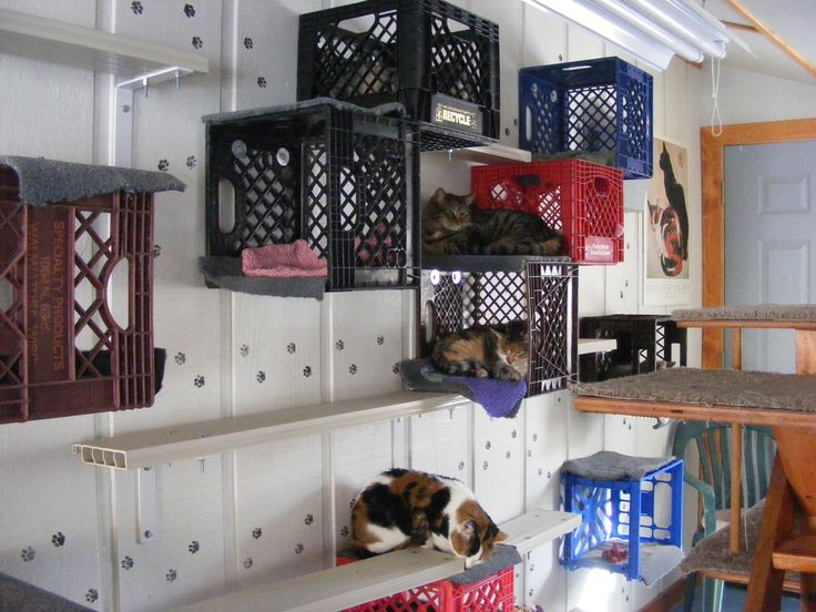 Dog and Cat Rescue use: Milk crates (Feline Rescue)
