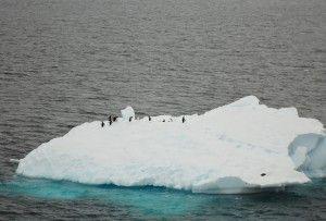 Iceberg : lieu branché pour les manchots en Antarctique