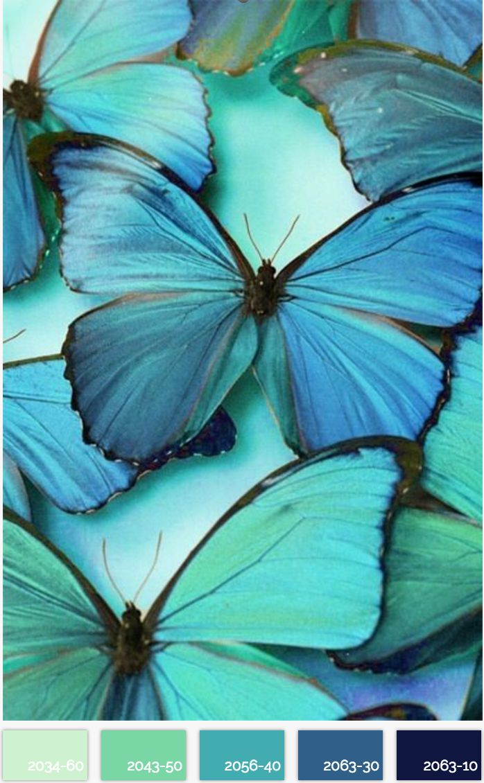 Best 25 teal color palettes ideas on pinterest teal color azure butterflies do you have an eye for color share it with us nvjuhfo Images