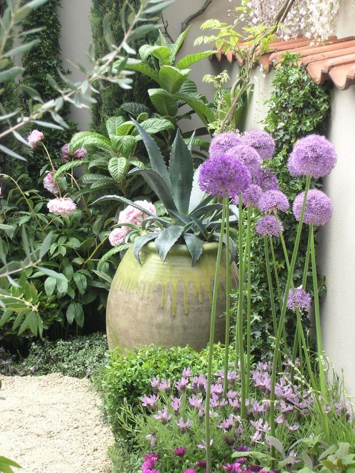 Superb Agave Zierlauch Lavendel mediterran