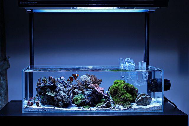 In the shallows img 0078 by teamschreiba via flickr http for Aquarium recifal nano