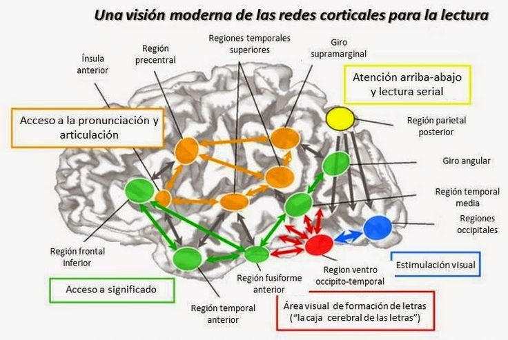 "Música, Arte y Cerebro: ""Neurociencias y Educación"""