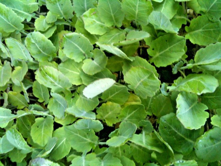 Mixed Vegetable Plant Plugs (10 plants from £5.99)