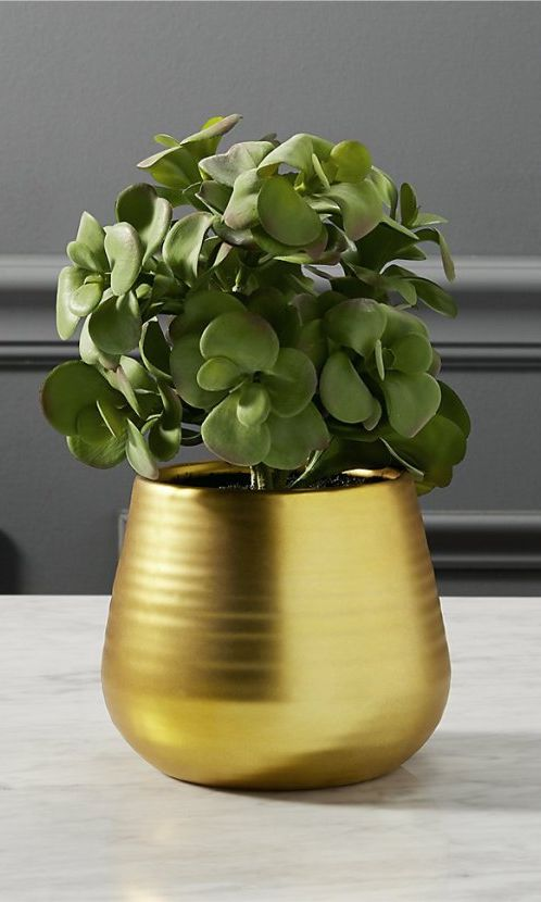 A small, simple house plant. | Best Hostess Gift Ideas, Holiday 2016 | Sponsored by Ferrero