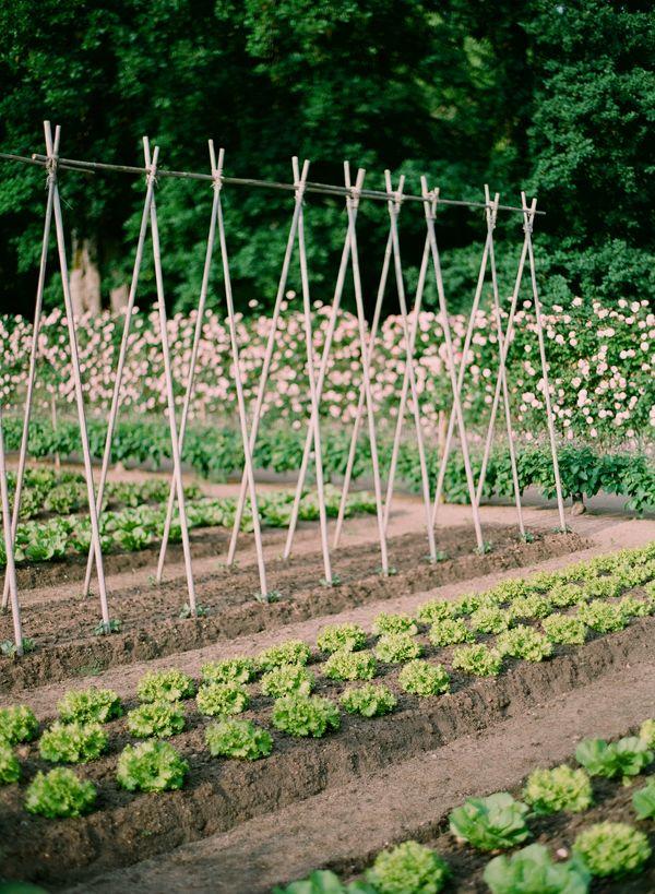 Orderly: Climbing Frames, Design Gardens, Gardens Variety, Gardens Design Ideas, Modern Gardens Design, Gardens Perfect, Beans Pole, Garden Design Ideas, Gardens Designs