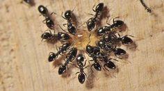 Ne désespérez pas ! Il existe de nombreuses solutions naturelles et écologiques pour vous séparer de ces petites bêtes.  Découvrez l'astuce ici : http://www.comment-economiser.fr/10-astuces-naturelles-pour-lutter-contre-les-fourmis.html?utm_content=buffercebdd&utm_medium=social&utm_source=pinterest.com&utm_campaign=buffer