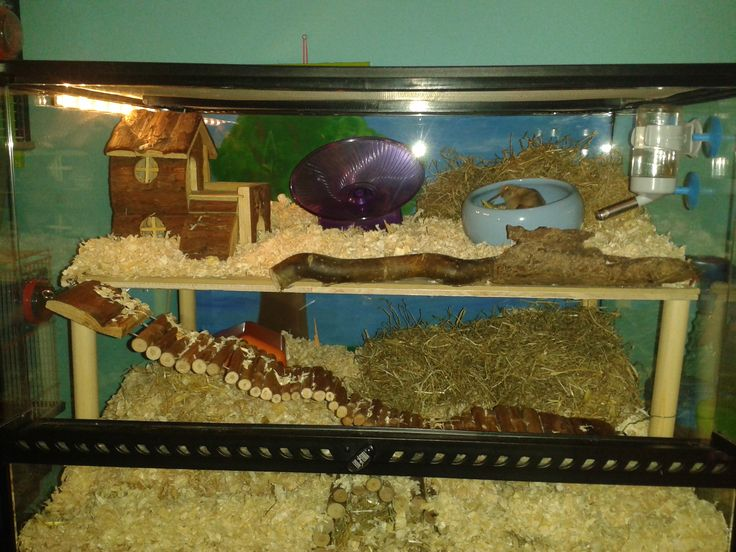 17 best images about hamster terrarium on pinterest cool for Fish tank for hamster