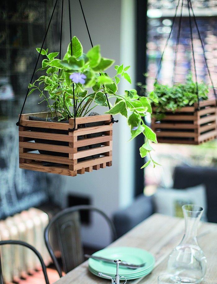 Des plantes à suspendre au dessus de la table...