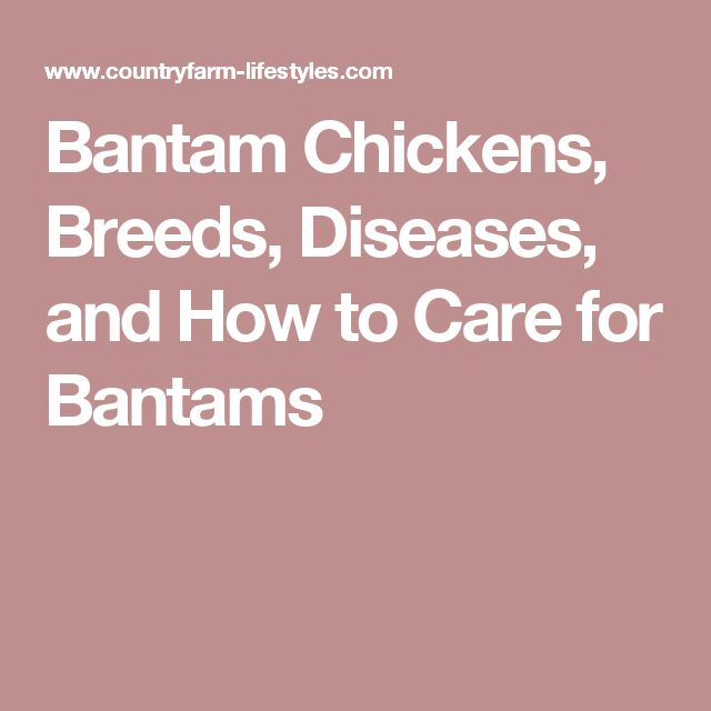 Bantam Chickens, Breeds, Diseases, and How to Care for Bantams