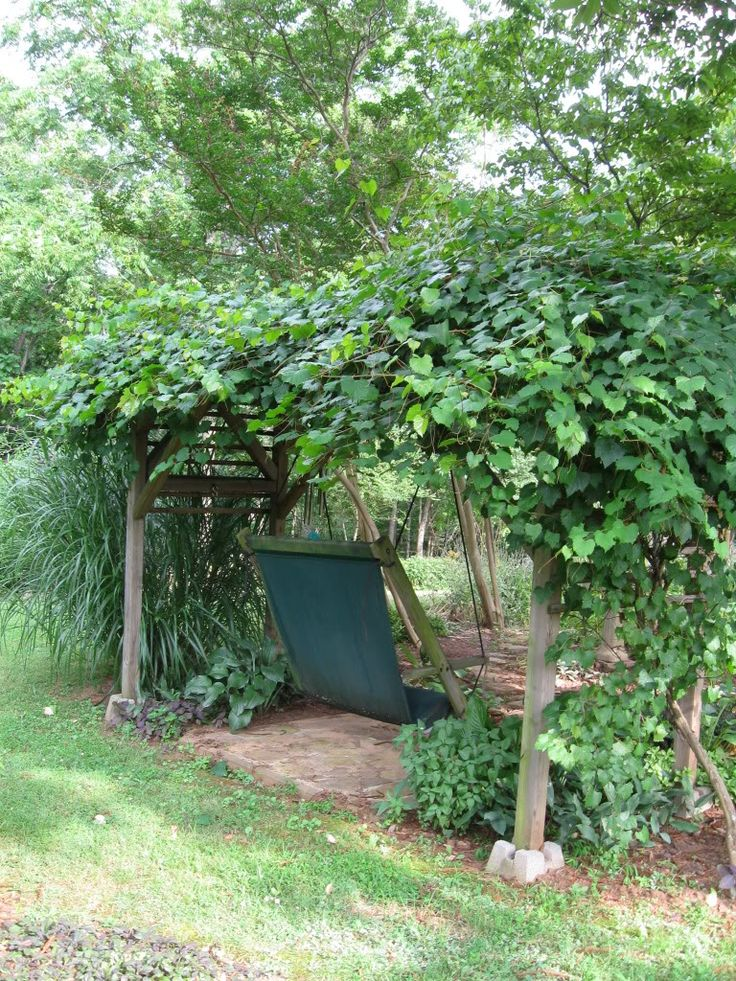 swing under muscadine grape vine arbor, I love muscadines AND scuppernongs, yum!!!