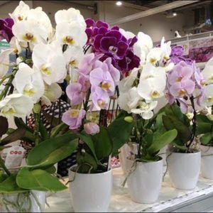 Уход за орхидеями в домашних условиях с фото и видео