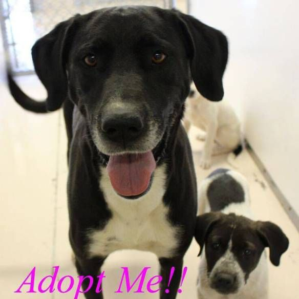 Bell County Animal Shelter FREE Dog and Cat Adoptions