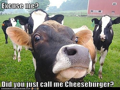 LOL   this doesn't even apply, they are all dairy cows, not beef cows!