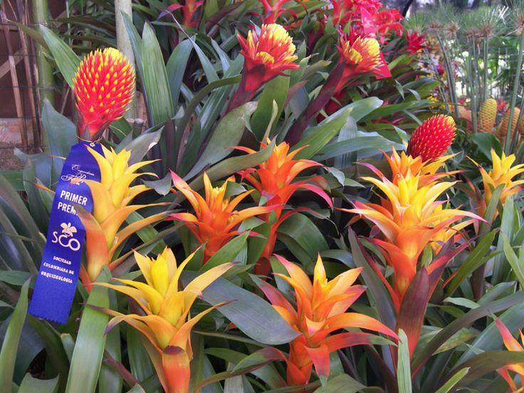 Best 25 flores medellin ideas on pinterest flores de for Bodas en el jardin botanico medellin