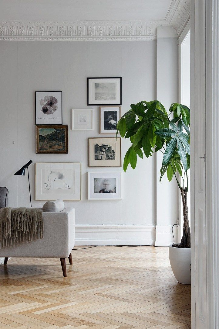 Tall Green Plant Simple Chair I Like The Pictures On Wall Too