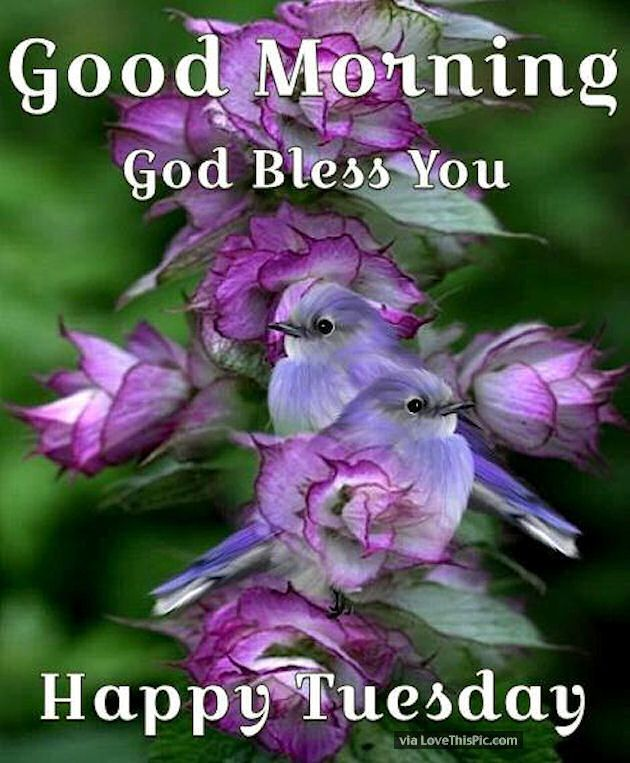 Good Morning God Bless You Happy Tuesday Image Quote Daily