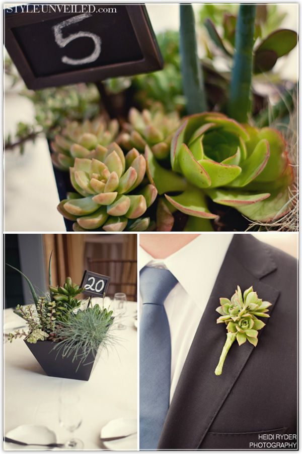 Here are some fabulous succulent wedding ideas!