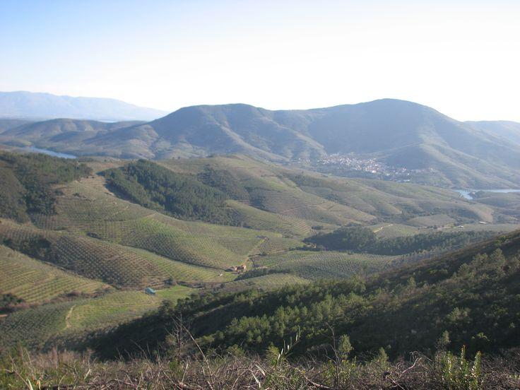 Otra panorámica de La Pesga obtenida desde las cercanías del Talamar. El pueblo está protegido por la Sierra de La Pesga y rodeado de olivos que son su principal fuente de recursos económicos, acompañados por algunos cientos de cerezos.
