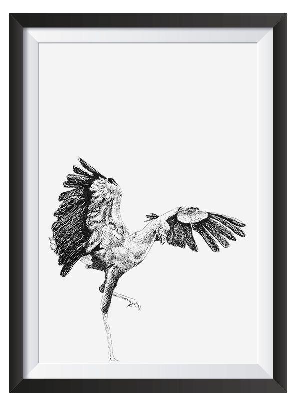 Secretary Bird illsutrated with Pen by Nicoll van der Nest