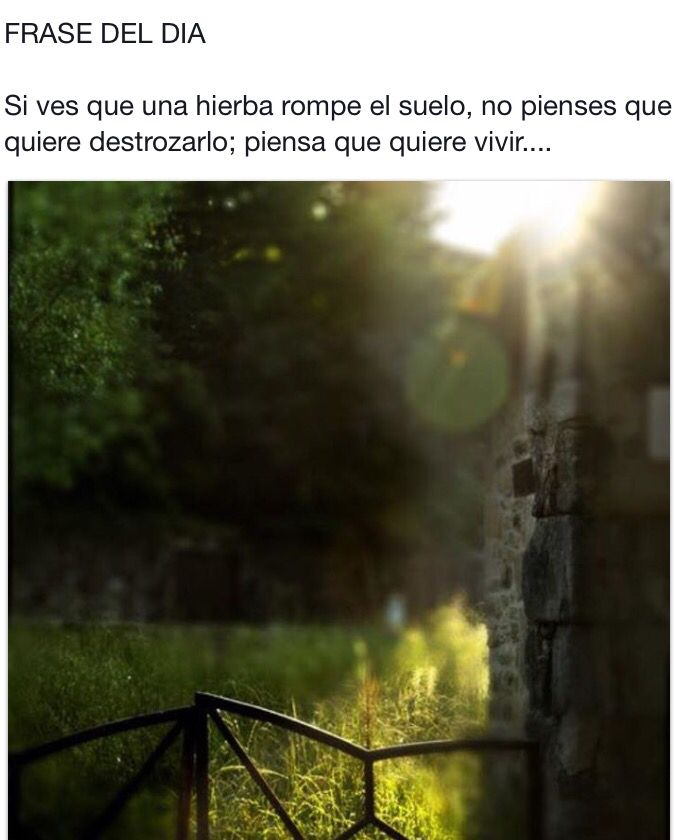 #citas #frases #frasesnaturaleza #frasedeldia #céspedsintetico #jardinería #paisajismo #gardening #landscape #artificialgrass #grass #padel #Valladolid  #flores #plantas #naturaleza #tenis #padel